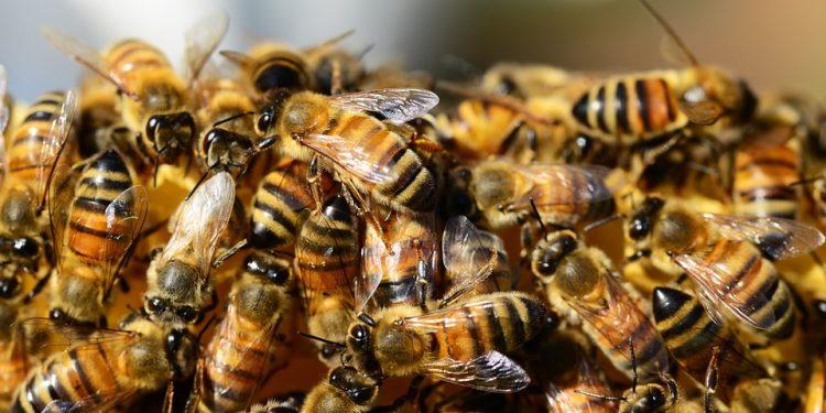 honey-bees-326334_960_720-750x375